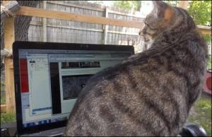 Steffen on the keyboard